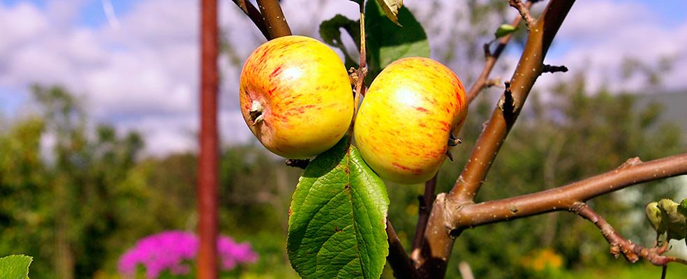Marja- ja puuviljatooted