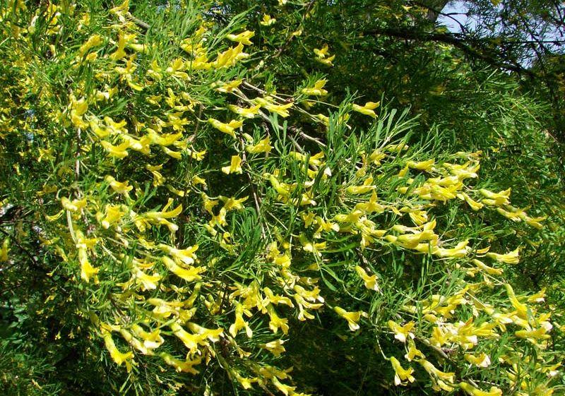 Азбука цветов Цветочная азбука  тайный язык цветов