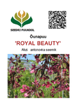 Õunapuu Malus ,Royal Beauty'